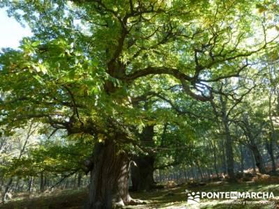 El Castañar de El Tiemblo , Un bosque mágico;mochila para senderismo;viaje senderismo